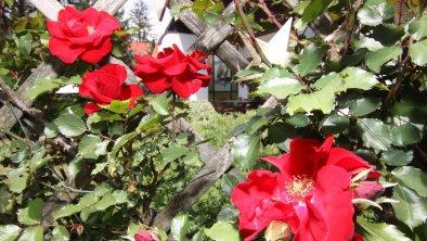 Garten 02, © Wessely Aloisia