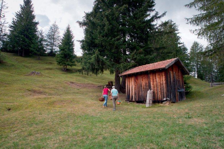 Die Waldeggers trifft man meistens mit Korb am Arm. , © Michael Ploner