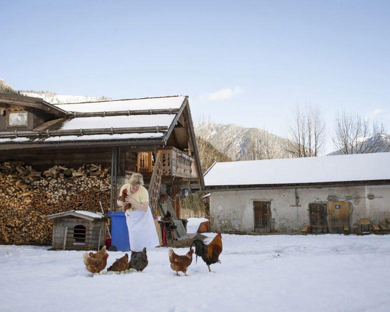 Hahn und Hühner am Bauernhof in Tirol.