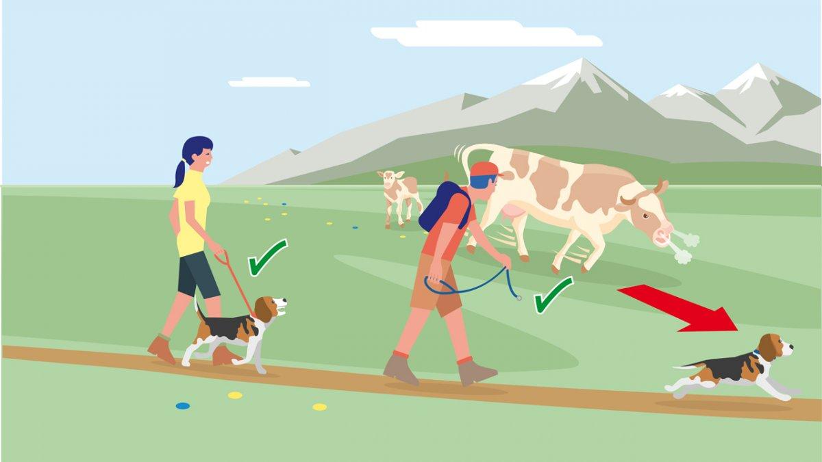 , © Landwirtschaftskammer Tirol