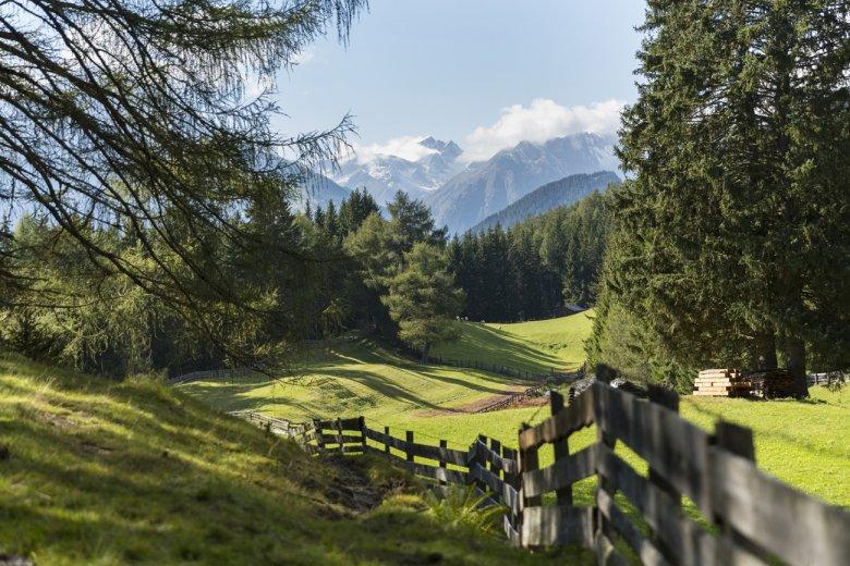 Das Zedlacher Paradies ist gesäumt von einem über 600 Jahre alten Lärchenwald.