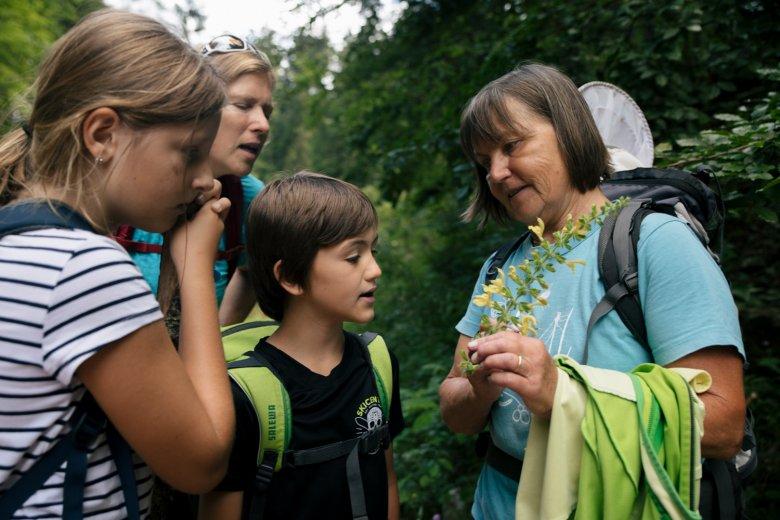 Elfie erklärt den Kindern alles über Schachtelhalme, Witwenblume und Pestwurze.