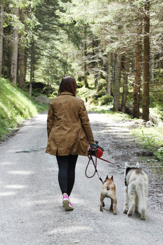 Wandern mit Hund in Tirol
