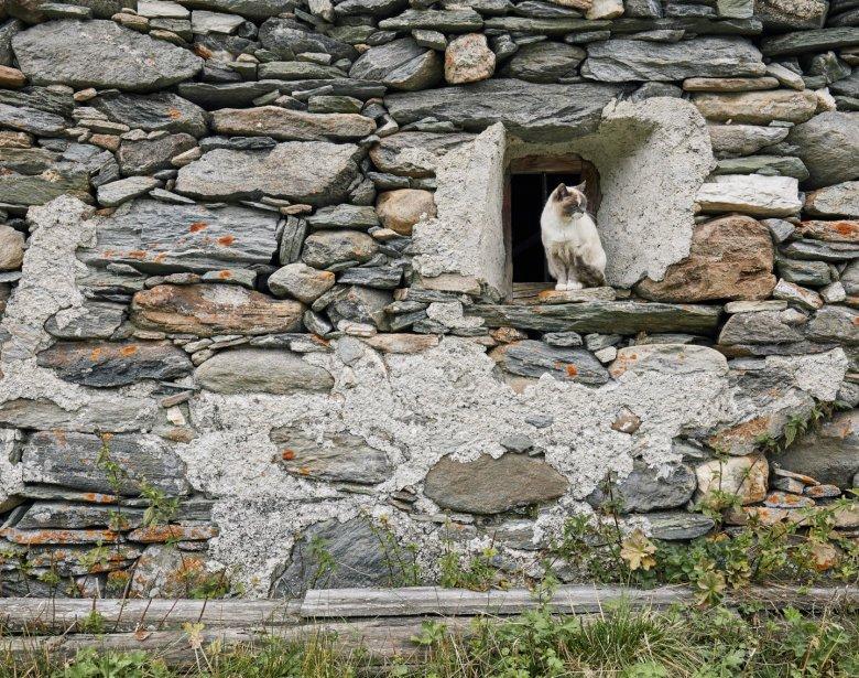 In Tirol gibt es Almen, die vor mehr als 500 Jahren gebaut wurden.