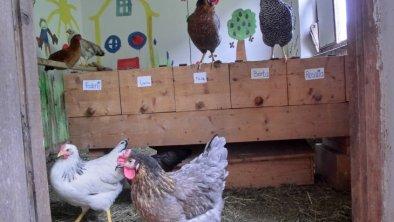 Damentratsch im Hühnerstall
