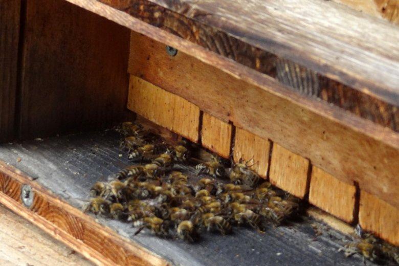 im Bienenhaus