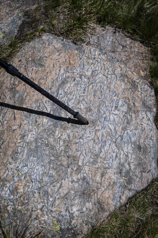 Das Mineral Hornblende zieht sich wie dunkle feine Kratzer durch das Gestein.