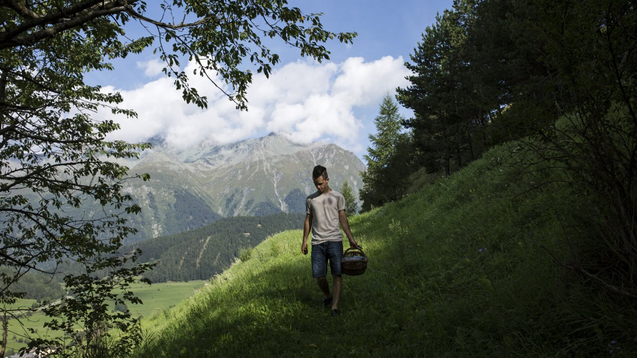 Michael Ploner beim Kräutersammeln, © Tirol Werbung/Lisa Hörterer