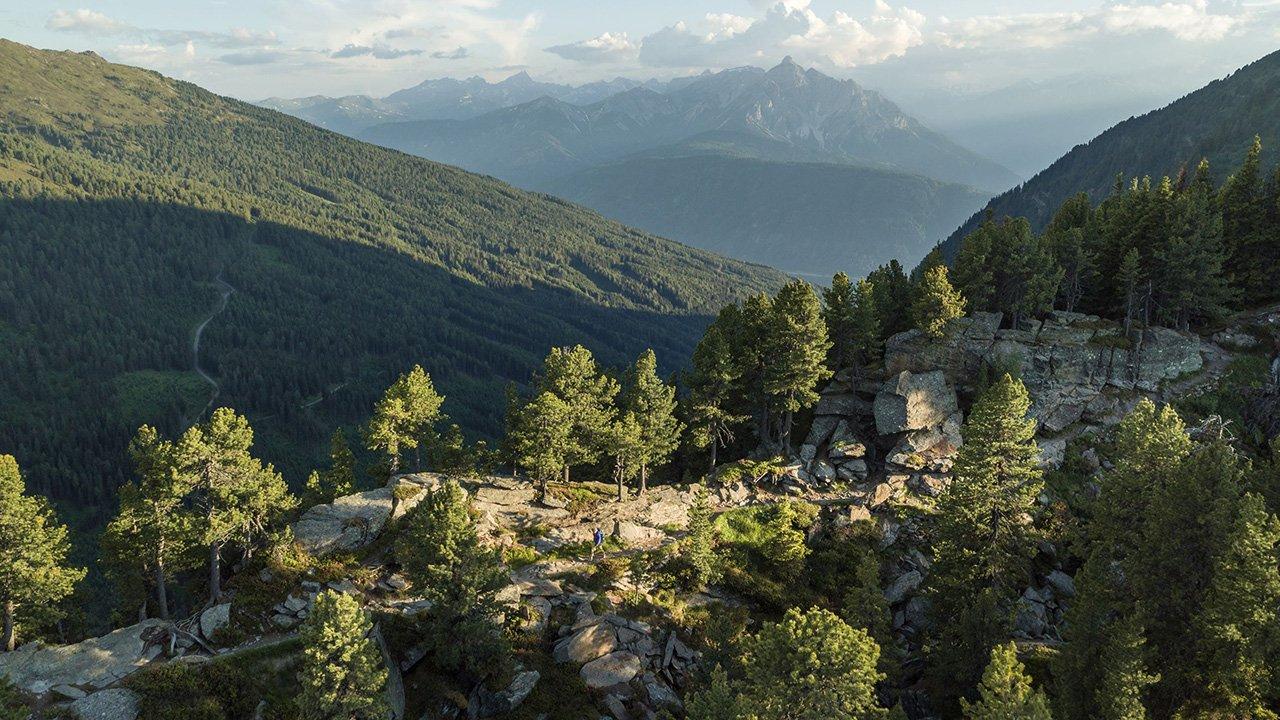 Zirbenweg, © Tirol Werbung / Venier Martin
