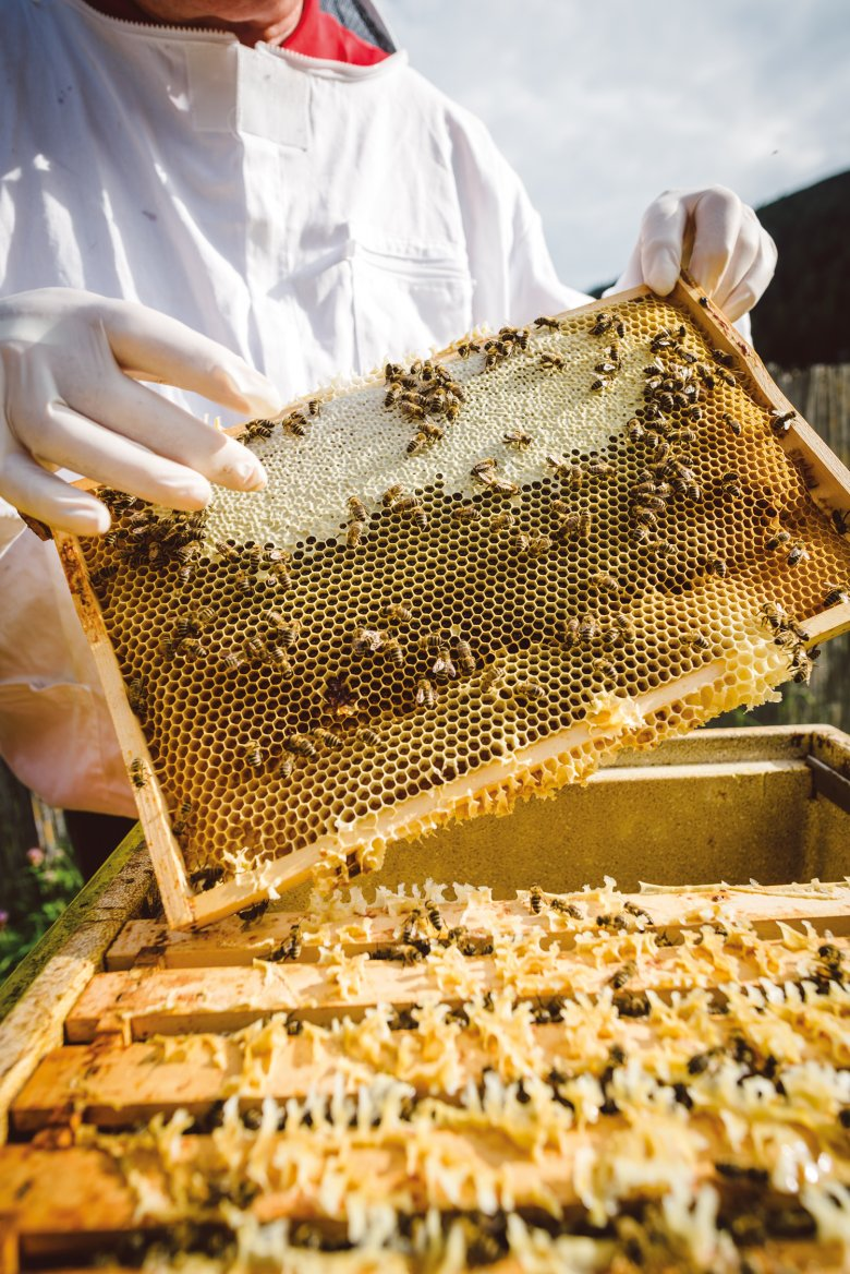 Eine einzelne Honigwabe. Wenn ein Drittel der Zellen verdeckelt sind, ist der Honig reif.