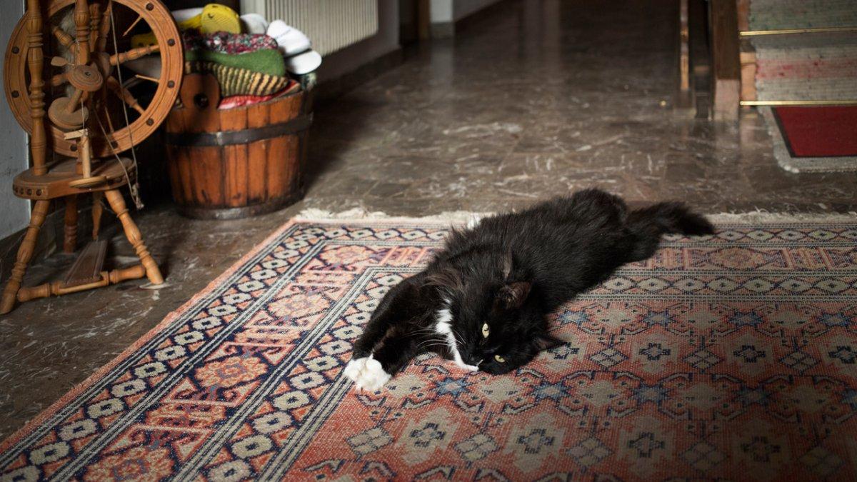 Die Katzen auf dem Hof zeigen, wie Erholung geht – einfach nachmachen., © Tirol Werbung/Lisa Hörterer