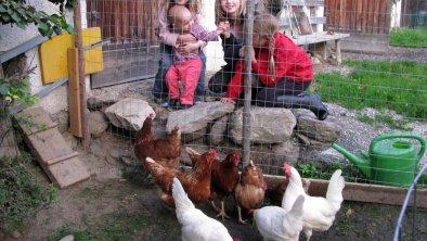 Tiere am Kinderbauernhof Tunelhof