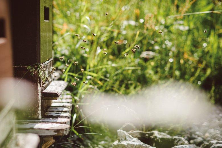 Hochbetrieb am Flugloch: Schwer beladen mit Nektar und Pollen kommen die Bienen von ihrem Ausflug zurück.
