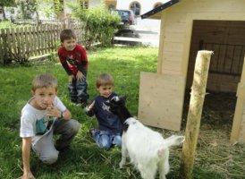 Ziegenfütterung am Klammerhof, © Urlaub am Bauernhof
