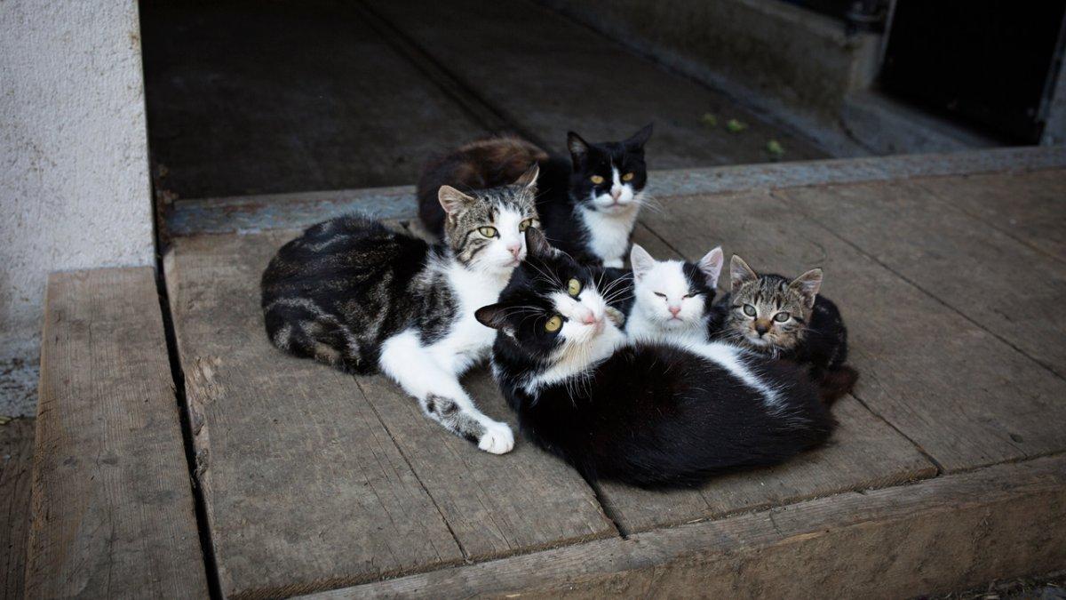 Wenn die Katzen Junge haben, sind sie die große Attraktion, vor allem für die Kinder., © Tirol Werbung/Lisa Hörterer