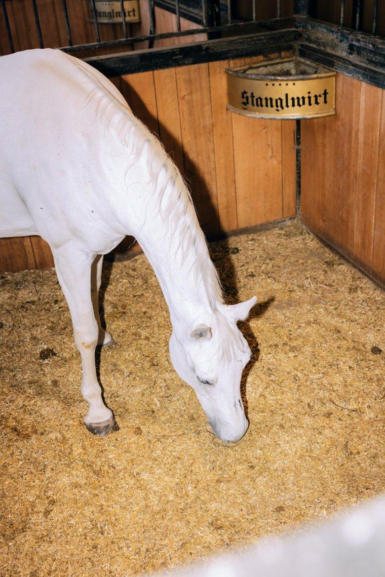 Nicht nur Gäste fühlen sich hier wohl, sondern auch die Pferde.