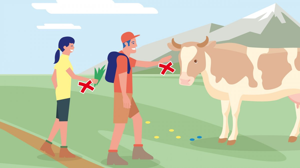 Richtiges Verhalten Teil 1, © Landwirtschaftskammer Tirol