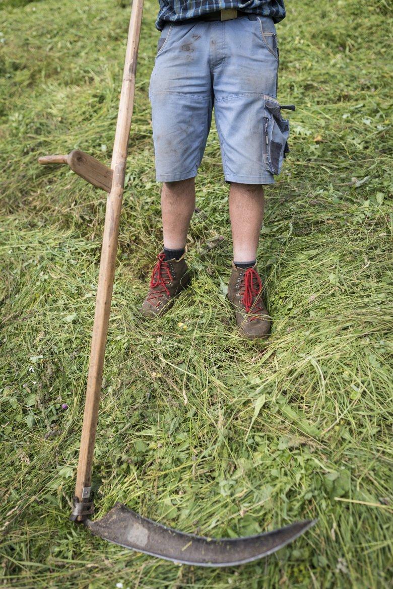 Teilweise sind die Wiesen rund um den Stableshof so steil, dass Sie nur per Hand gemäht werden können.