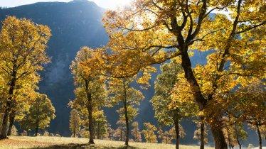 Ahornboden in der Eng, © Tirol Werbung/W9 Studios
