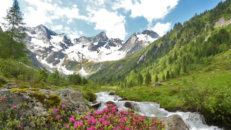 Bodengrund, © Hochgebirgs-Naturpark Zillertaler Alpen