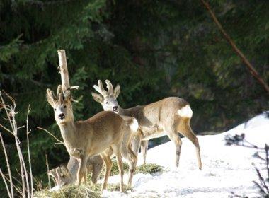 Ernst Rudigier_ Die befreundeten Winterbo¦êcke