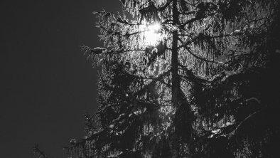 Winter2, © Wunderwelt