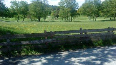 Sicht Golfplatz, © Wessely