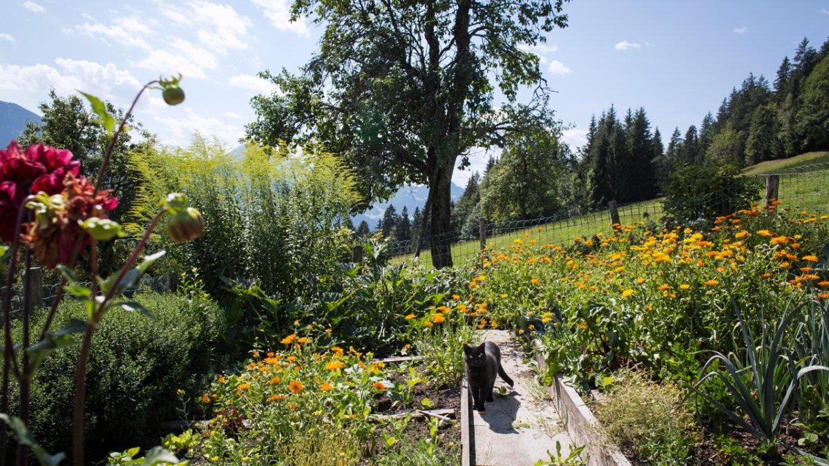 Aus dem Obst- und Gemüsegarten kommen viele Zutaten für die hausgemachten Leckereien., © Tirol Werbung/Lisa Hörterer