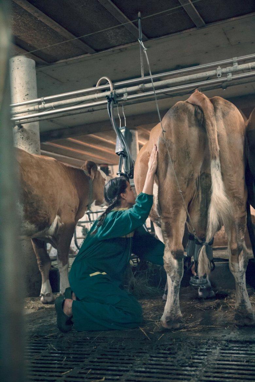 Pauline war erstaunt, wie geduldig die Milchkuh ihre eher ungeschickten ersten Melkversuche über sich ergehen ließ.